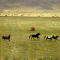 Катание на лошадях, прогулки